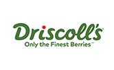 Driscoll Icon